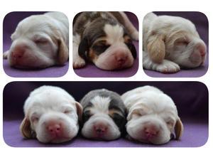 Pups at 1 week old
