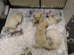 Pups 5 weeks old