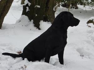 Pip in snow