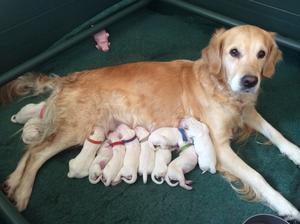 Annie's second litter