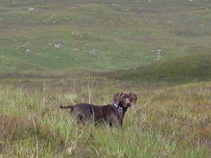 Rannoch on Rannoch Moor!