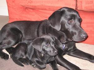 Dellan Dellap as a pup with big sister 'Lexi'