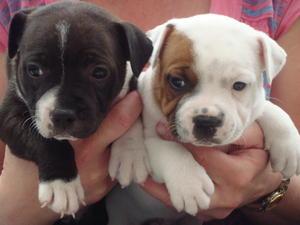 2 bitch pups