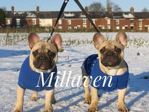 Stunning puppies