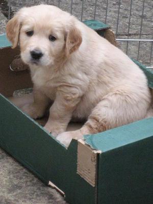 Lulu 5 weeks