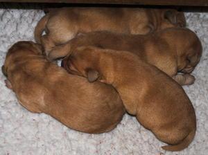 Mellow's pups