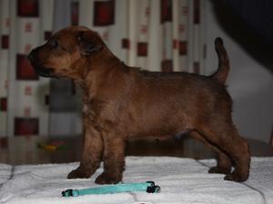 Male Pup 4 Weeks