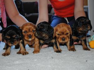 Pups 4 Weeks old