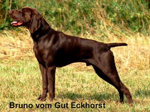 Bruno vom Gut Eckhorst