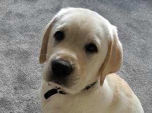 Previous Pup at 10 weeks