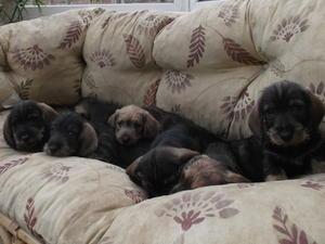 Diva's Puppies