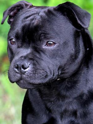 Wins Minor Puppy & Best Puppy Bitch at Bath 2016