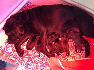 PUPS AT BIRTH