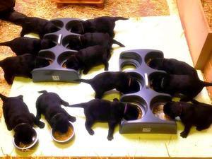 Pups feeding 2nd July