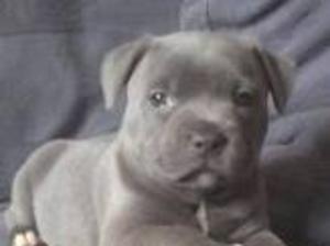 Previous Pups