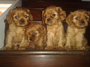 Olaf, Rosie, Matilda and Teddy