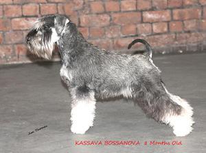 Kassava Bossanova