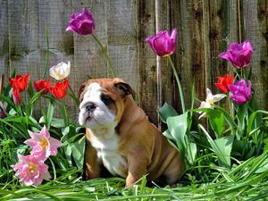 puppy@9weeks