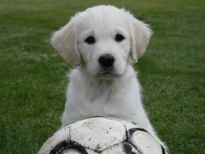 Hattie as a puppy