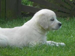 Puppy born January 2014