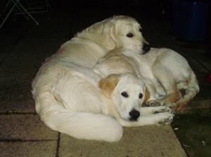 Oscar & Daisy - The best of friends