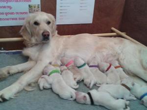 Bailey's 1st litter Easter 2015