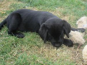A pup from Brocks first litter