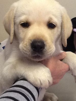 Puppies at 7 weeks