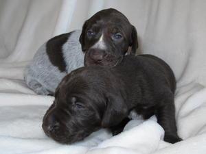Pups at 2 weeks old