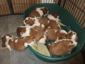 I think we need a bigger bed!