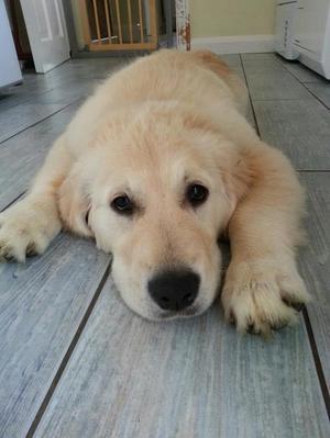 Roxy age 16 weeks