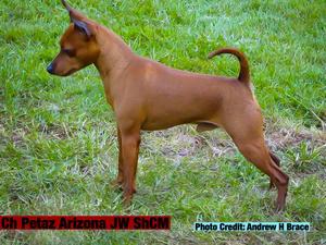 Ch Petaz Arizona JW ShCM