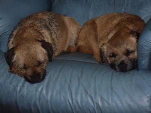 Lilly & Rosie