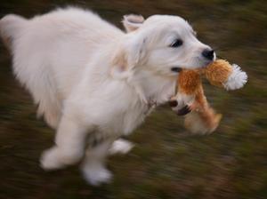 Jessie as a puppy