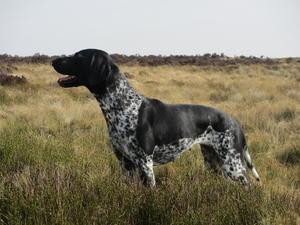 Lola on the moors