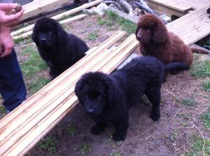 Pups in Training!