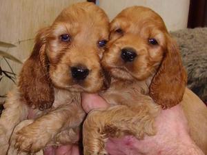 Pups at 6.5 weeks