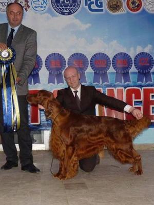 MULTI BEST IN SHOW, MULTI CH GLENNARA COER DE LION