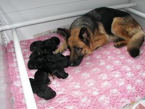 Ellie & babies