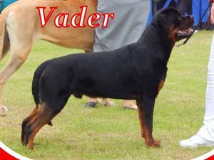 Vader @ 9 months old