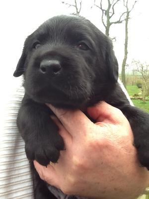Myrtles puppy aged 3 weeks