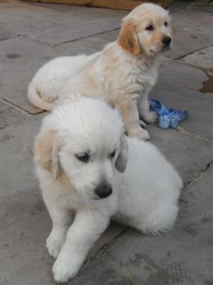 Briar's Puppies
