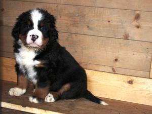 Katie - 6 weeks old