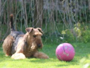 Dixon at play