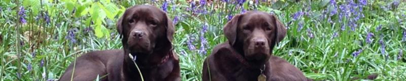 Poppy and Lola