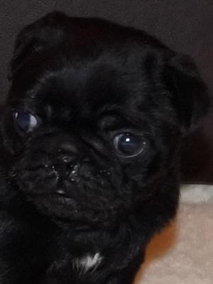 Previous Pup