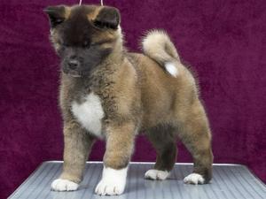 Causepark Bred Puppy