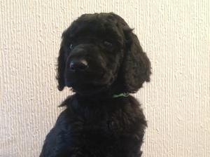 4 weeks old