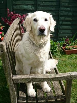 Cassie in the Garden