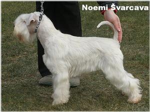 Noemi Švarcava